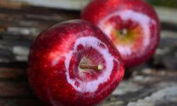 Пять плодов для диабетиков зимой, чтобы контролировать сахар в крови
